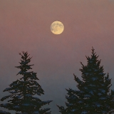 Moon Between Spruces